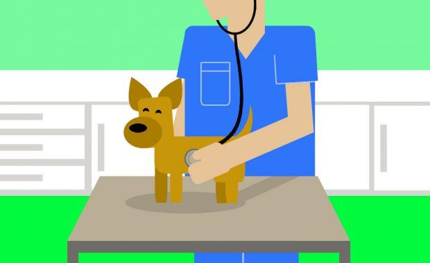 Cachorro en el veterinario