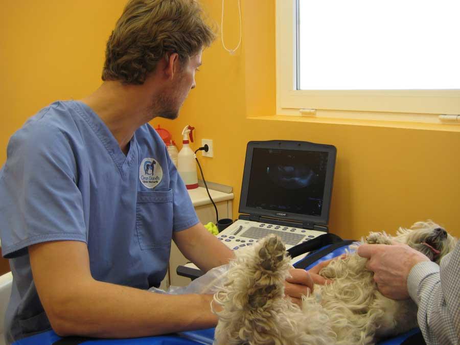 veterinaria-aranda-de-duero-ecografia